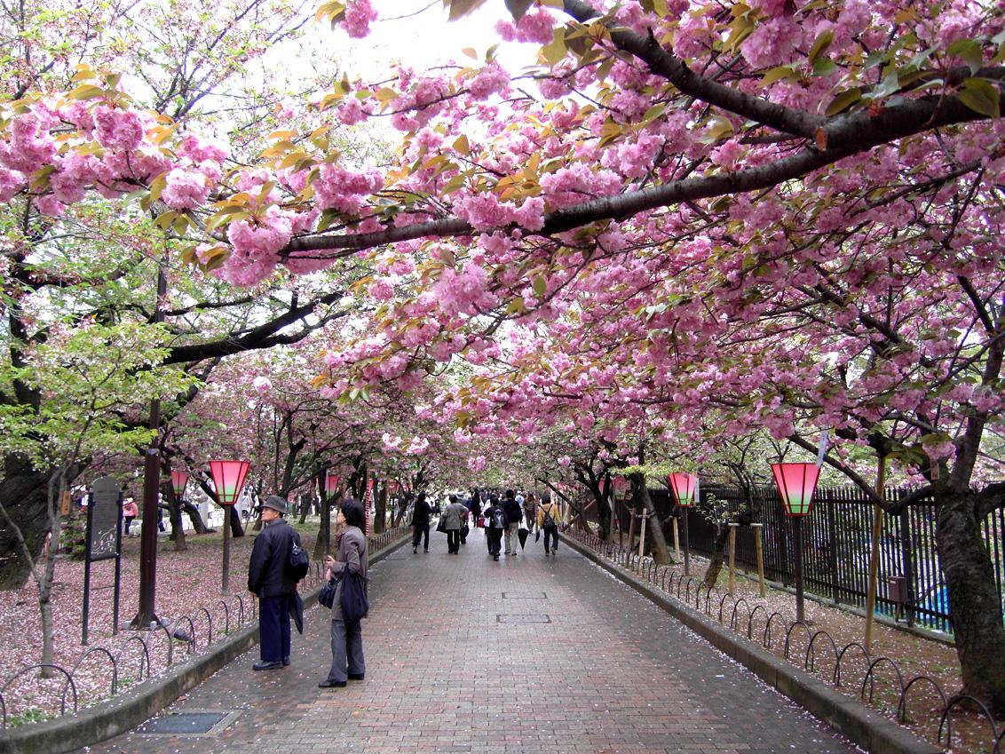 Primavera en Japón 2018